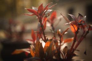 Roślina w barwach jesieni