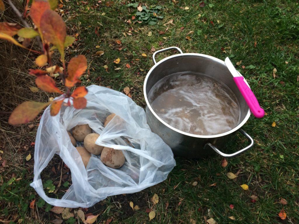Ziemniaki na jesiennym tle