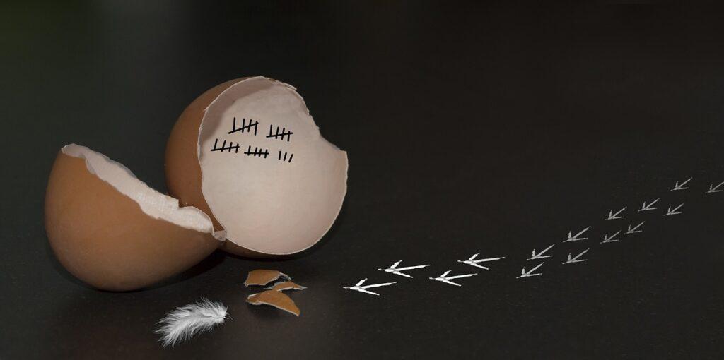 jajo, z którego uciekł kyrczak
